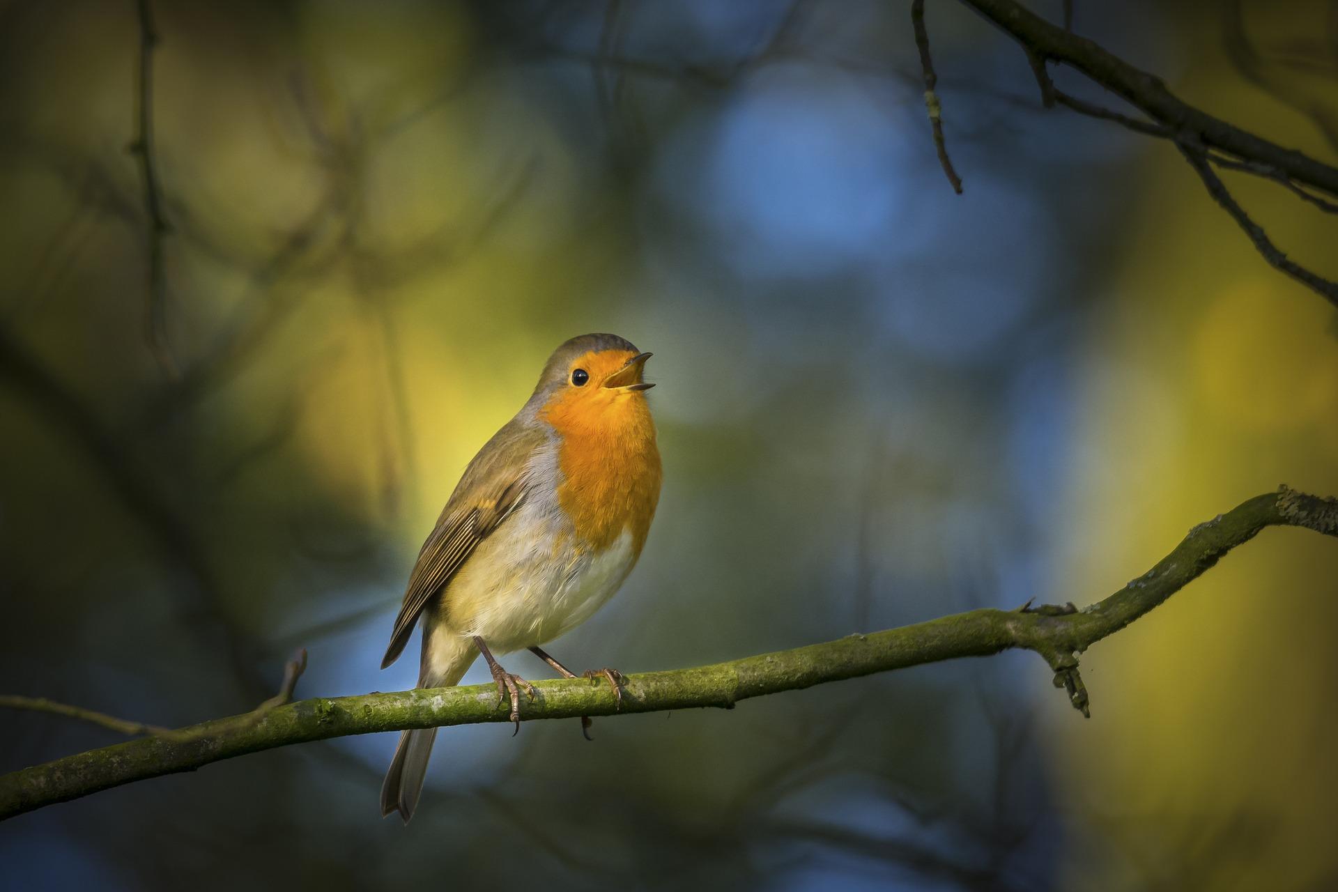 Птица голос